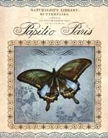Papilio Paris Fine-Art Print