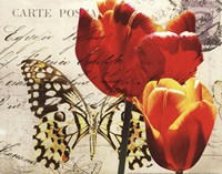 Carte Postale Tulip II Fine-Art Print