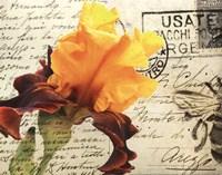 Carte Postale Iris Fine-Art Print