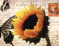 Carte Postale Sunflower Fine-Art Print