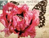 Carte Postale Poppy Fine-Art Print