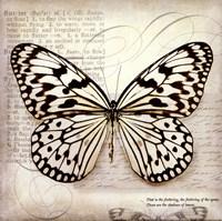 Butterflies Script III - mini Fine-Art Print