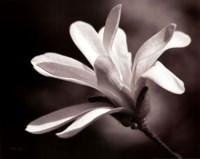 Magnolia Dreams II Fine-Art Print