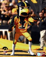 Herky the Hawk, the University of Iowa Hawkeyes Mascot Fine-Art Print