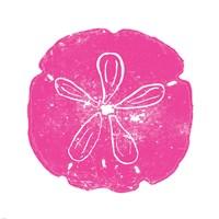 Pink Sand Dollar Fine-Art Print