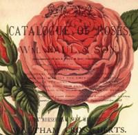 Roses III Fine-Art Print