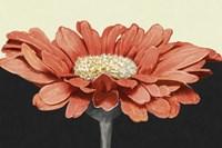 Apricot Flame I Fine-Art Print