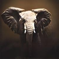 On Safari Fine-Art Print