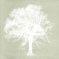 Dream Tree III Fine-Art Print