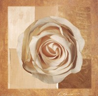 Warm Rose I Fine-Art Print