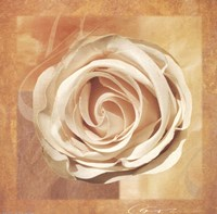 Warm Rose II Fine-Art Print