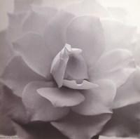 Allure IV Fine-Art Print