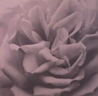 Allure III Fine-Art Print