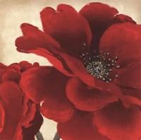 Red Peony I Fine-Art Print