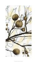 Willow Blooms II Fine-Art Print
