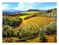 Chianti Vineyards Fine-Art Print