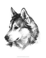 Canine Study III Fine-Art Print