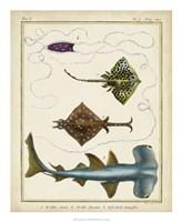 Antique Rays & Fish I Fine-Art Print