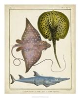 Antique Rays & Fish II Fine-Art Print