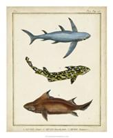 Antique Rays & Fish III Fine-Art Print