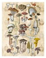 Mycological Study Fine-Art Print