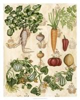 Edible Botanical I Fine-Art Print