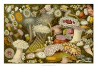 Sea Anemone Panorama Fine-Art Print