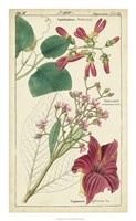 Spring Blooms IV Fine-Art Print