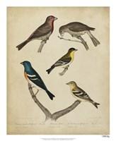 Bonapart Birds I Fine-Art Print