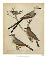Bonapart Birds II Fine-Art Print
