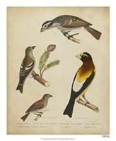 Bonapart Birds IV Fine-Art Print