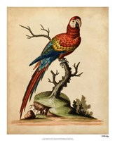Edwards Parrots I Fine-Art Print
