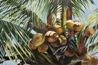 Los Cocos Fine-Art Print