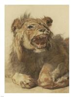 A Lion Snarling Fine-Art Print