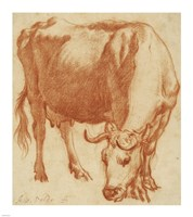 A Cow Grazing Fine-Art Print