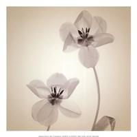 Quiet II - Mini Fine-Art Print