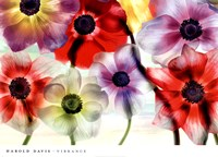 Vibrance Fine-Art Print