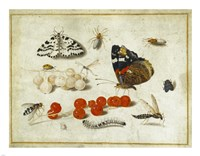 Butterflies, Insects, and Currants Fine-Art Print