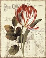 Garden View II - Red Tulip Fine-Art Print