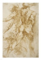 Anatomical Studies Fine-Art Print