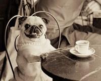 Cafe Pug Fine-Art Print