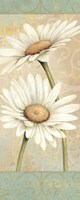 Beautiful Daisies II Fine-Art Print