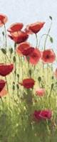 Mountain Poppies I Fine-Art Print