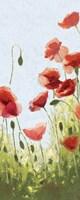 Mountain Poppies II Fine-Art Print