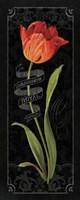 Tulipa Botanica II Fine-Art Print