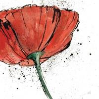 Not a California Poppy I on White Fine-Art Print