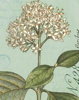 Botanique Bleu IV Fine-Art Print
