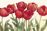 Ruby Tulips Fine-Art Print