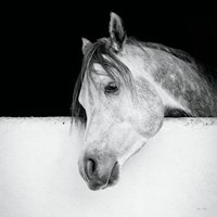 Lonesome Gray Fine-Art Print