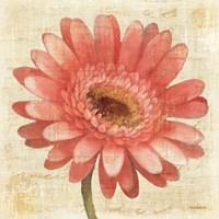 Blushing Gerbera on Cream Fine-Art Print